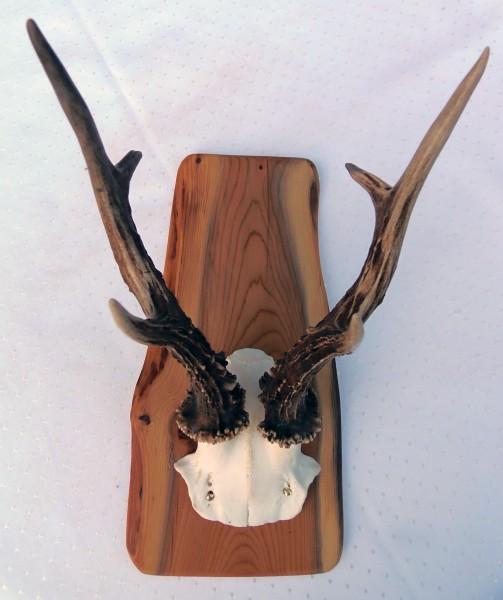 Reh-Gehörnbrett aus heimischen Edelholz